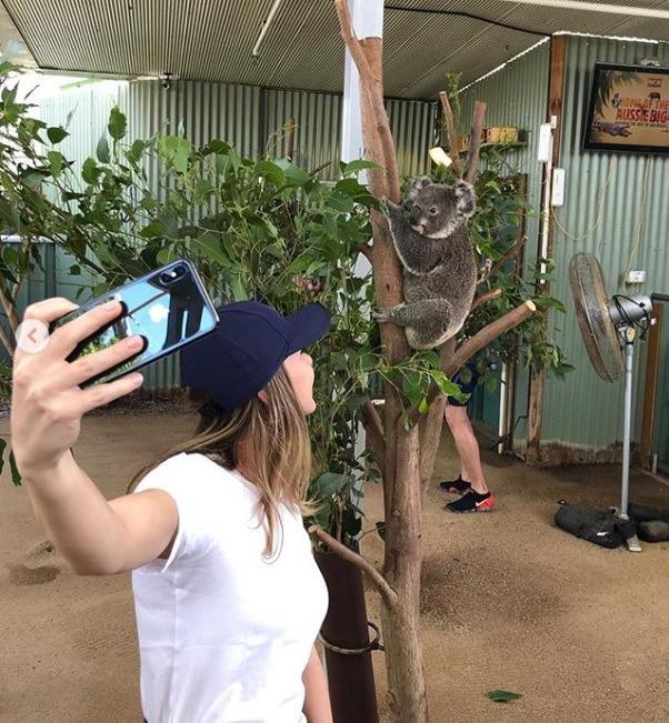 halep-koala